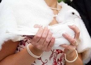 White Dove in the hands of the bride